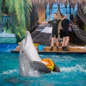 Дельфинарии, океанариумы Москвы