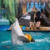 Дельфинарии, океанариумы в Москве